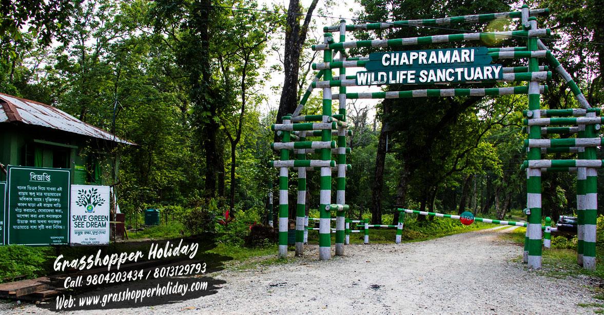 chapramari-forest