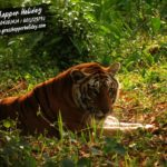 South Khairbari  Eco Park- Leopard & Tiger Rescue Center