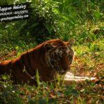 South Khairbari  Eco Park- Leopard & Tiger Rescue Center