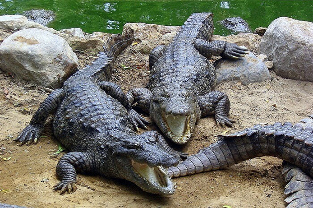 Amo-Chhu-Crocodile-Breeding-Center- Phuntsholing - Dooars package tour