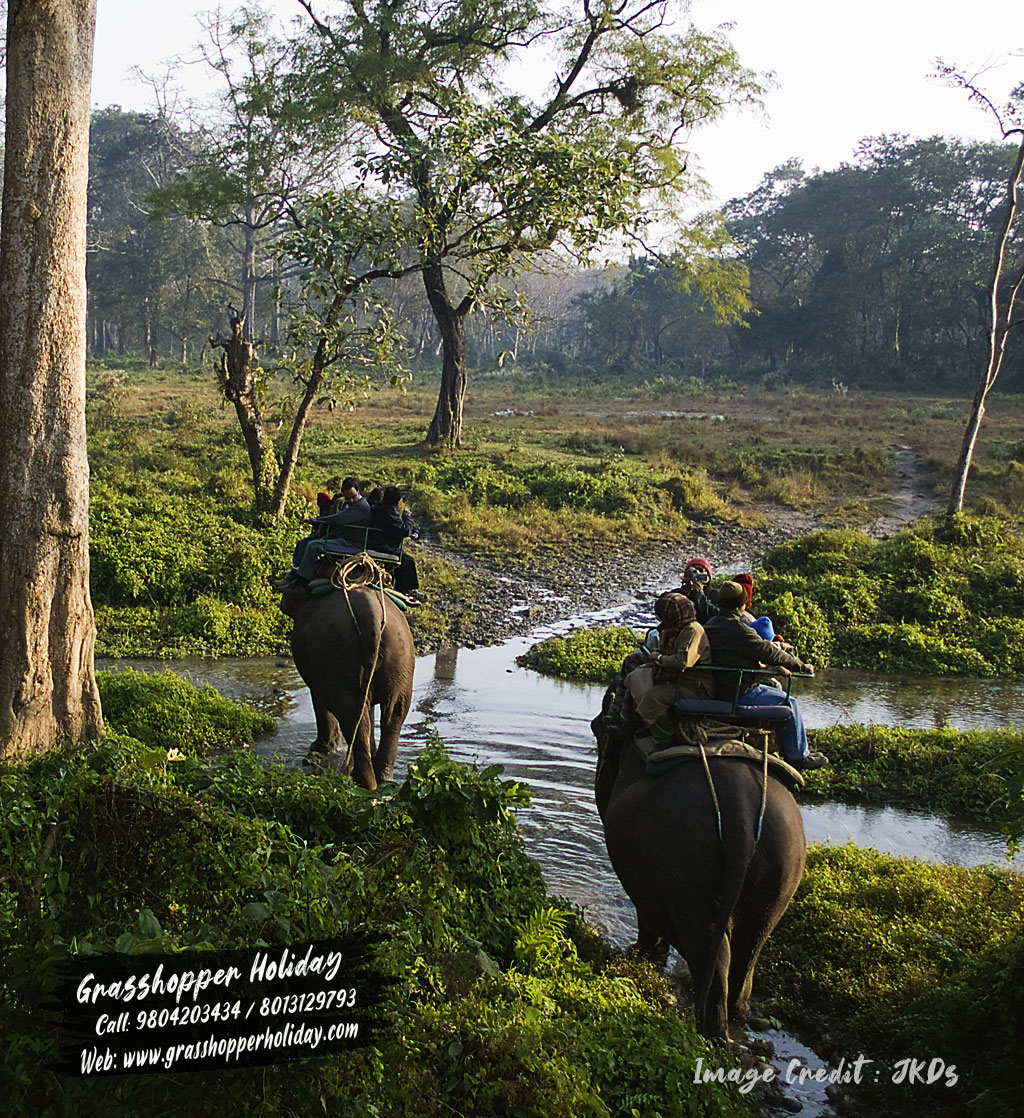 Jaldapara National Park - Dooars Package tour