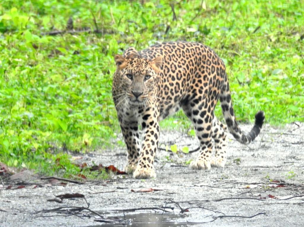 bengal safari park dooars