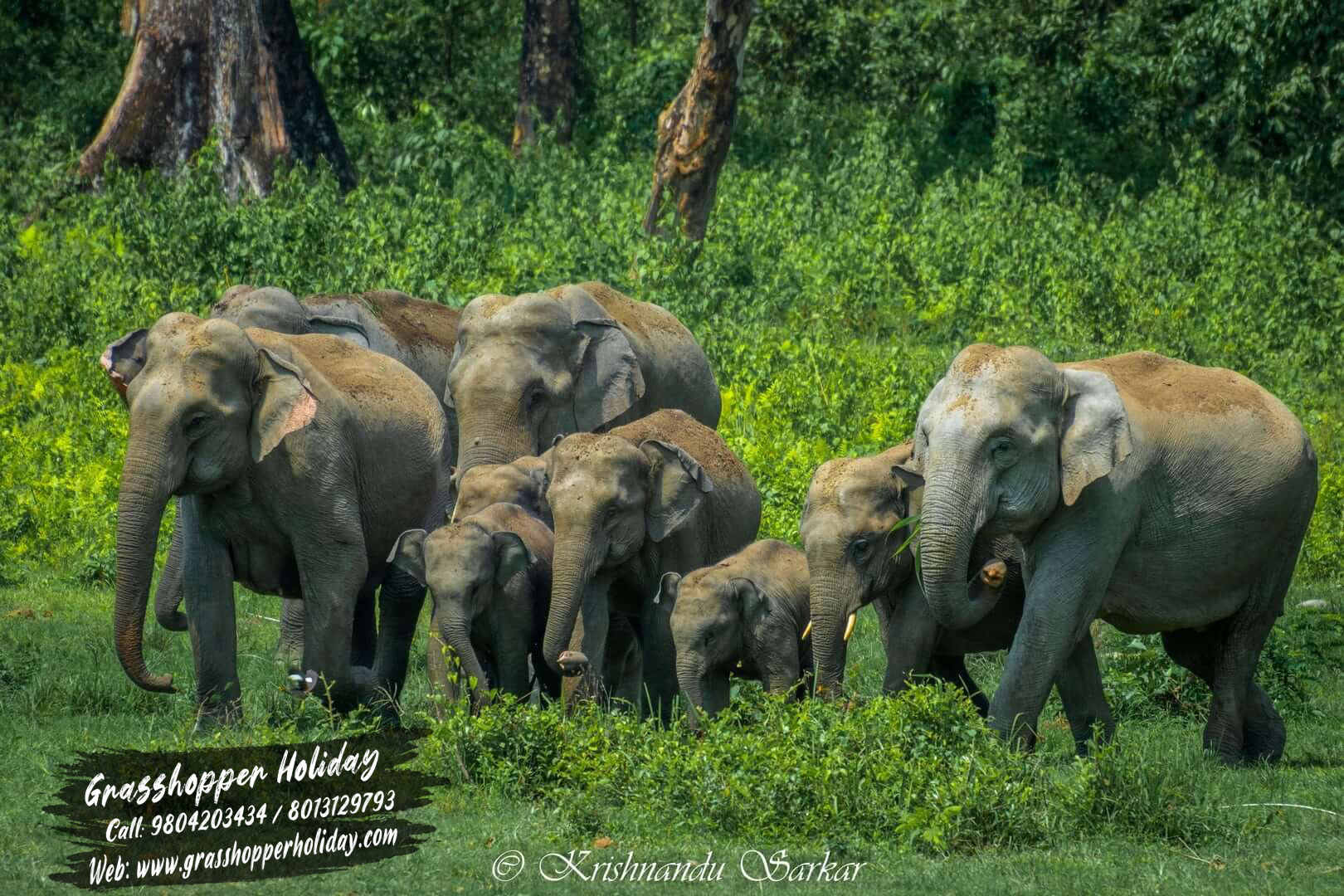 Gorumara national park elephant