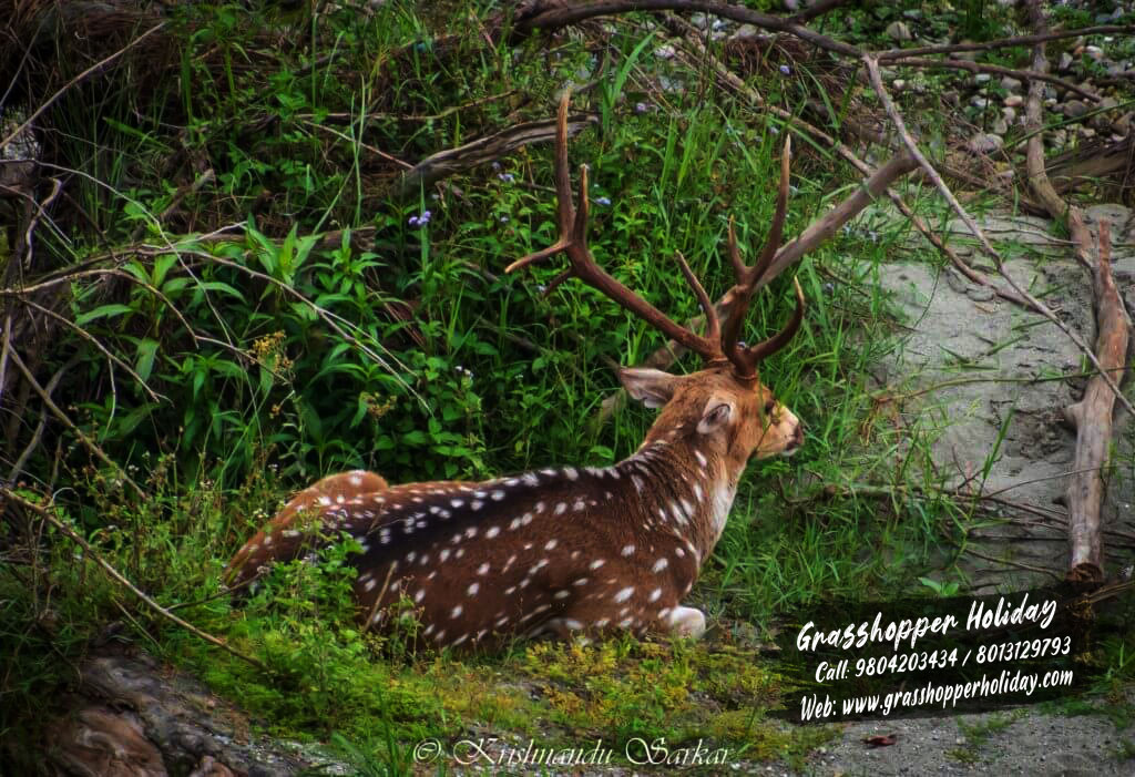 gorumara_spotted_deer dooars package tour