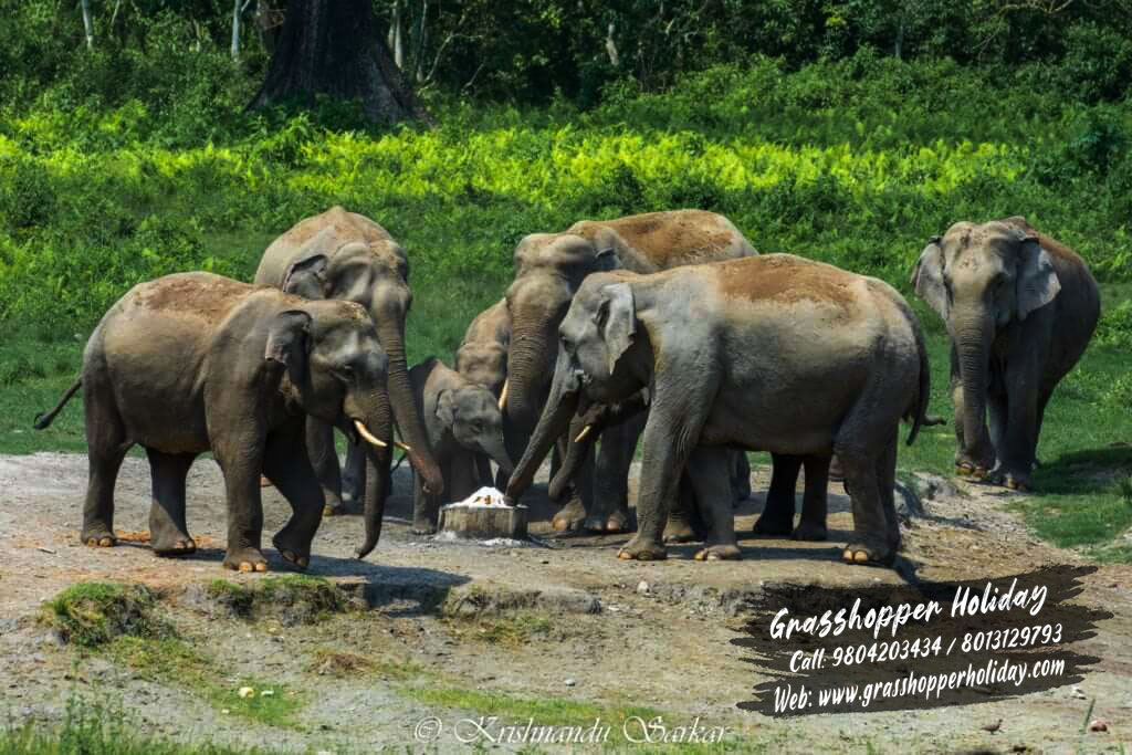 gorumara wild animal , dooars package tour